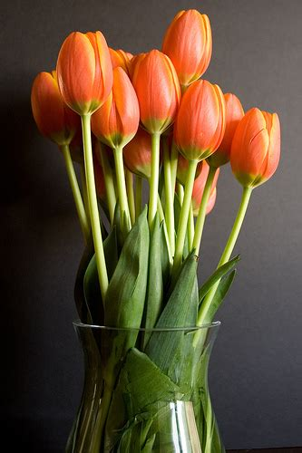 Vases For Tulips by Tulips In A Vase