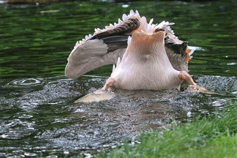 burgers zoo arnheim nl juli  klaus schachtschneider