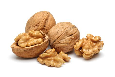 are walnuts for dogs can dogs eat walnuts pets world