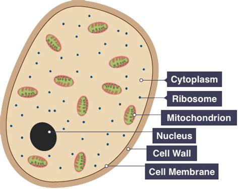 igcse biology   understand  term pathogen