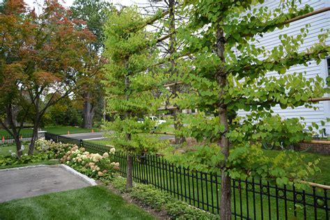 l shade retaining nut designing perennial gardens dirt simple decorating