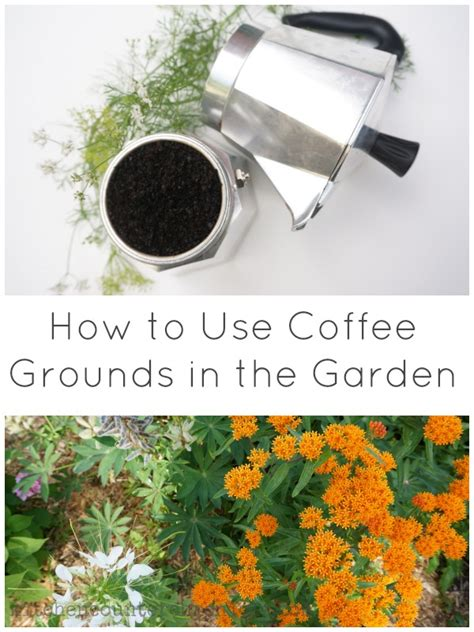 How To Use Coffee Grounds In The Garden by How To Use Coffee Grounds In The Garden