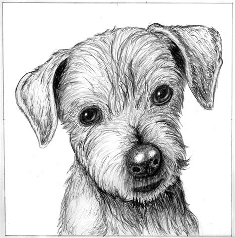 drawing of a puppy s sketch picture by rssatnam for line work drawing contest pxleyes