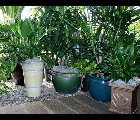 Indoor Plant Containers Decorative Containers Office Plants Indoor House Plants