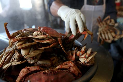 Whats In Season Dungeness Crabs by Opening Of California S Dungeness Crab Season Delayed By