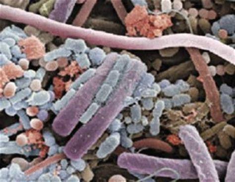 cadena alimenticia hongos y bacterias cadena alimenticia