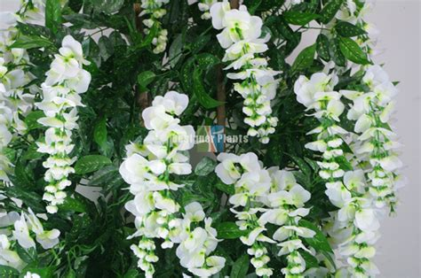 draping plants draping white flowering wisteria 185cm designer plants