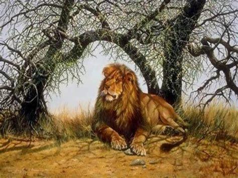 imagenes abstractas de leones leones muy buenas imagenes hd taringa