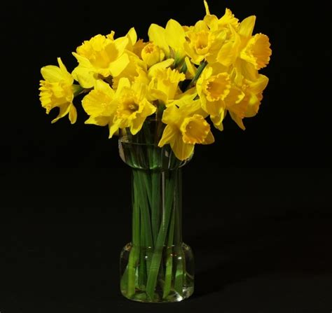 Daffodil Vase by Flower Vase Daffodils Jonquil Free Stock Photos In Jpeg
