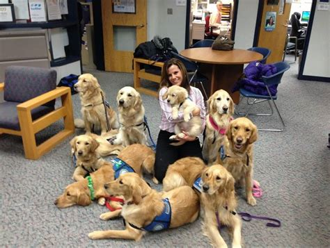 comfort pet certification local dogs a comfort to sandy hook students