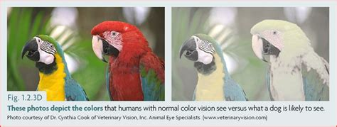 can dogs see color the s color vision and what it means for our ethology institute