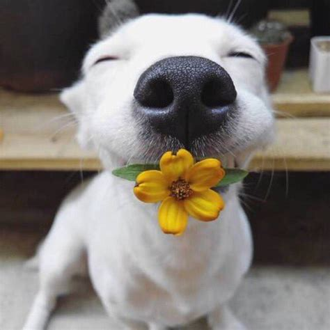 puppy with flowers dogs with flowers dogswflowers