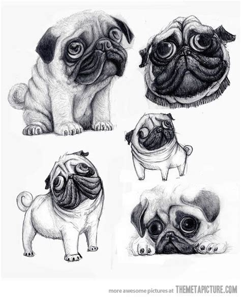 7 dogs that look like pugs about doggies a pug s caricature looks just like the real real caricatures and sketches