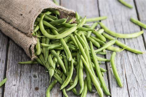 are green beans for dogs 10 fruits and vegetables that dogs absolutely to eat
