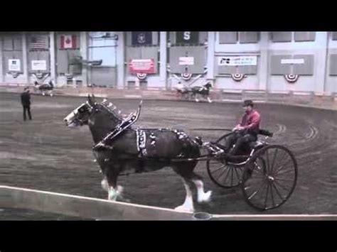 amish plowing with a seven hitch v 10 or 10 hitch pyramid style funnycat tv