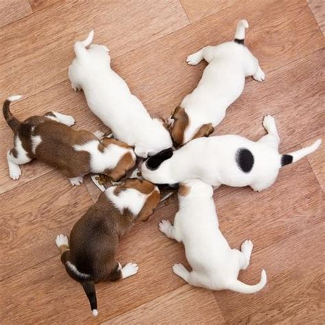 cibo per cani fatto in casa cibo fatto in casa per cani cuccioli 5 ricette