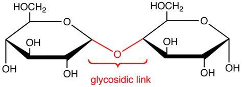 carbohydrates bonds glycosidic link ochempal
