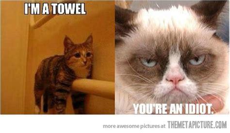 Funny Grumpy Cat Meme - funny cat memes june 2013