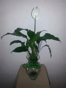 10 5 inch betta vase aquarium with peace plant green