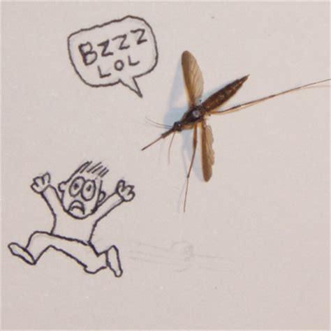 mosquito in my room frankentrina mosquitos
