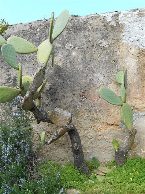 Jaket Azzurra 511 03 villa oliveto alghero sardinia