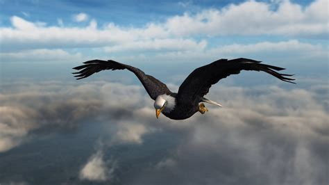 Fly To The Sky 1 2 american bald eagle fly in the sky up royalty free background 8