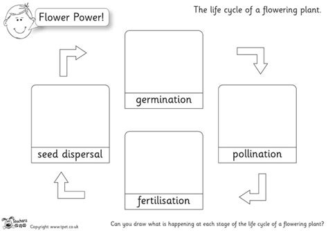 Pollination Worksheet Ks2 by S Pet Plant Cycle Drawings B W Premium