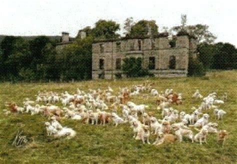 golden retriever house lord tweedmouth s golden retrievers the clan marjoribanks society