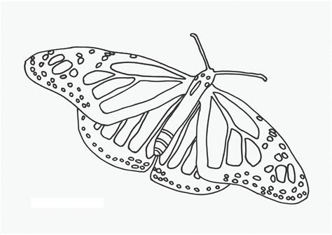 coloring pages butterflies free free printable butterfly coloring pages for kids