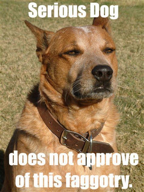 Serious Dog Meme - serious dog