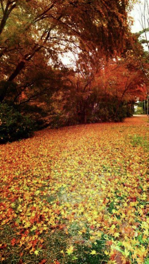 wallpaper daun gugur musim gugur daun daun gugur wallpaper sc android