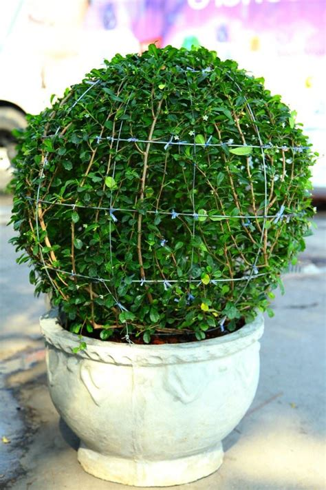 diy topiaries diy garden topiary projects the garden glove
