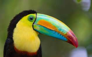 most colorful birds top 10 most colourful and tropical bird species