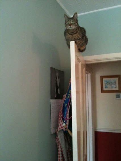 cats  doors  prove cats    acrobatic