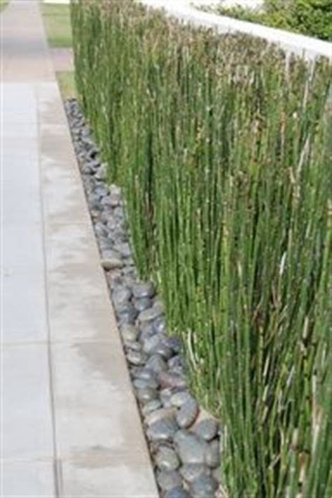 Landscape Fabric Horsetail 1000 Ideas About Chain Link Fence On Fencing