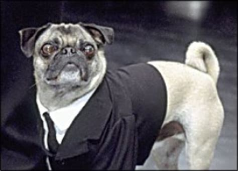 mib pug name frank the pug in black wiki the in black encyclopedia anyone can edit