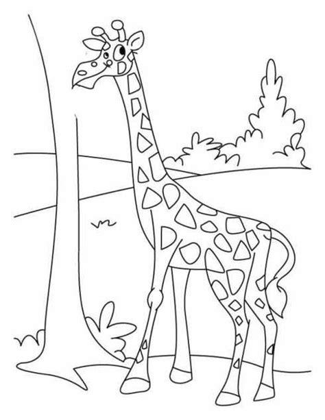 gambar jerapah untuk mewarnai | Binatang, Warna, Buku mewarnai