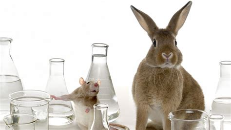 test animali animal testing what do you think about it new