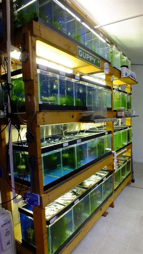 aquarium shelf google search aquarium fish aquarium