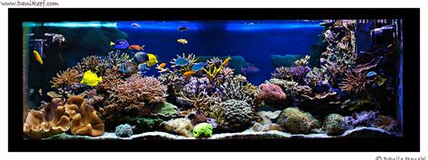 vasche per acquari marini acquari fotografati archives danireef il sito dedicato
