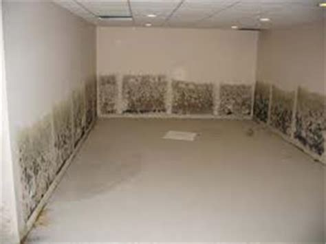 basement mold prevention inspectpro professional building inpection service