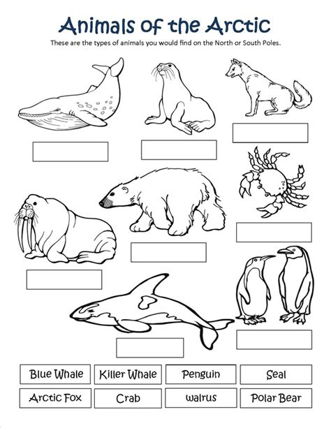 Free Coloring Pages Of Habitat Arctic Animals Coloring Pages