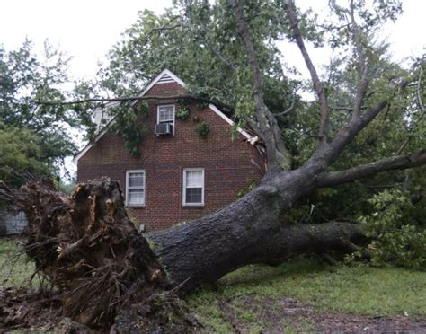 homeowners insurance and dead trees who is responsible for a fallen tree
