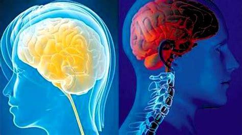 imagenes de el cerebro humano 10 curiosidades sobre el cerebro humano youtube