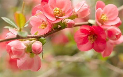 cute hd wallpaper of flowers 40 beautiful flower wallpapers free to download