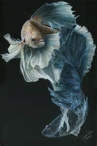 siamese fighting fish three painting by wayne pruse