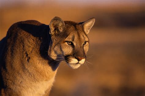 reset nvram mountain lion our opinion decision by cpw to begin quot predator control