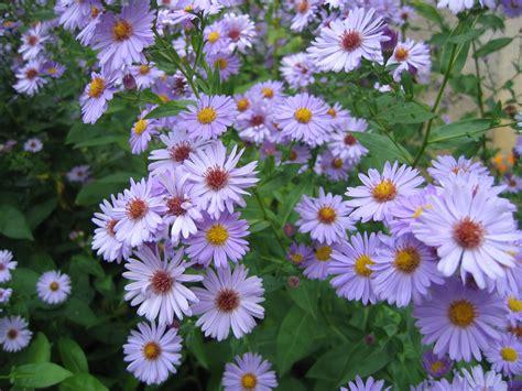 file fleurs de jardin ni 232 vre jpg wikimedia commons