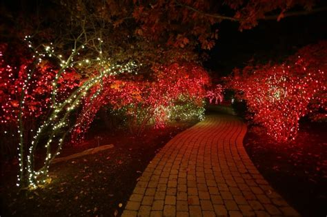 toledo zoo lights hours toledo zoo lights before christmas toledo zoo