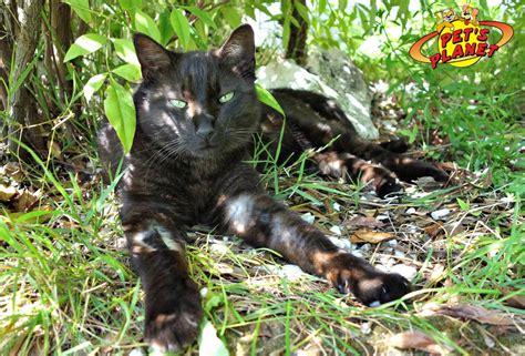 alimenti ricchi di taurina calcoli renali nel gatto sintomi e trattamento diety3
